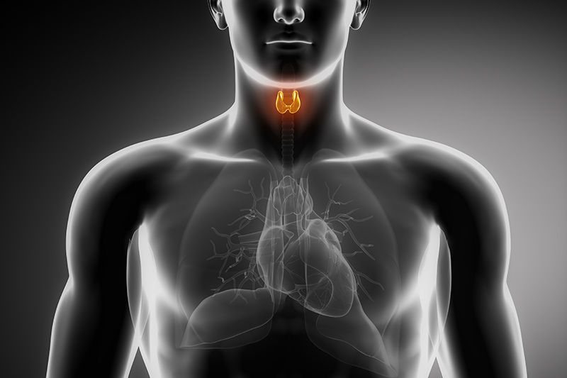 Illustration of man with thyroid highlighted